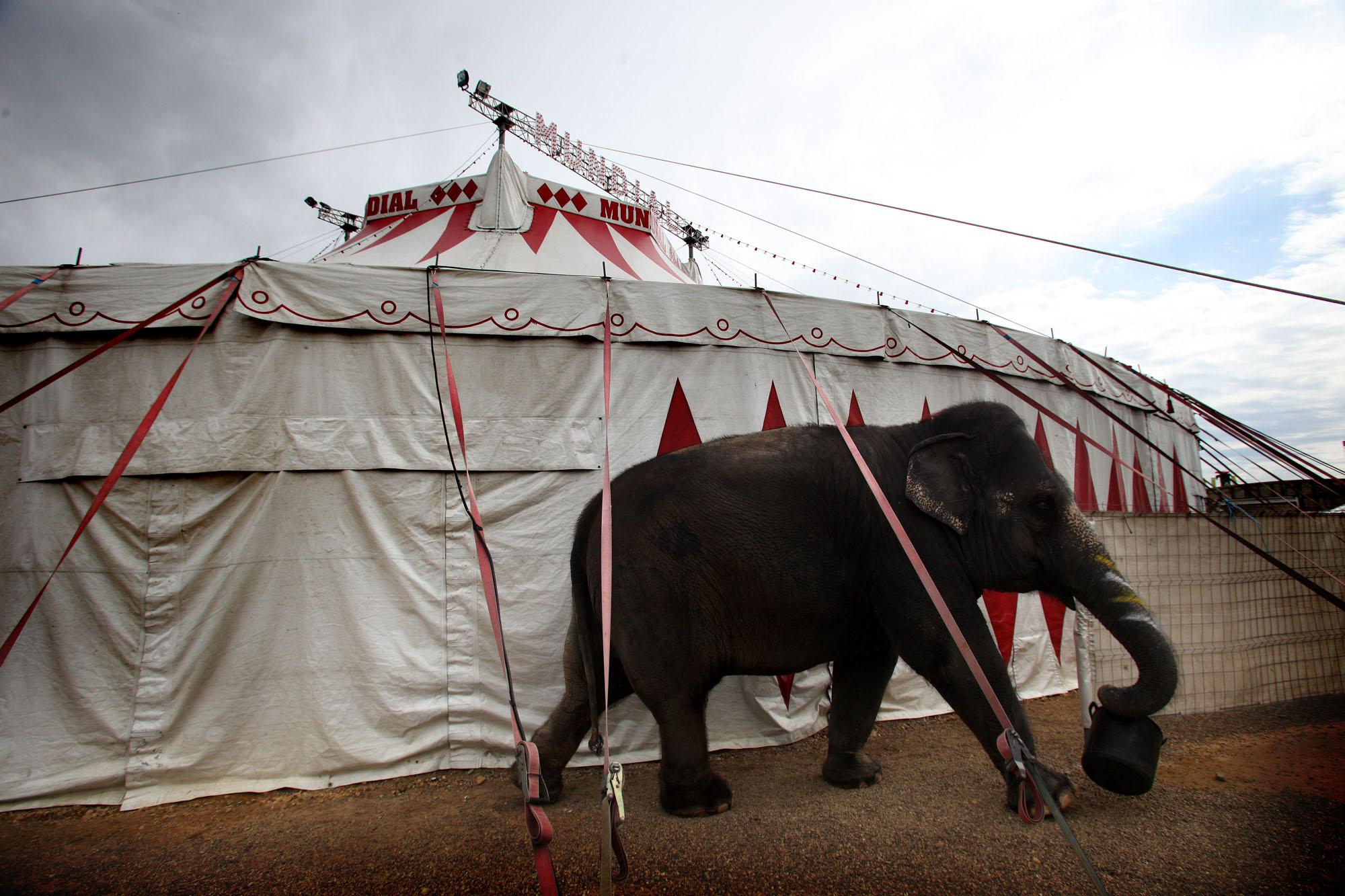 circo mundial faltyny-fr-0338